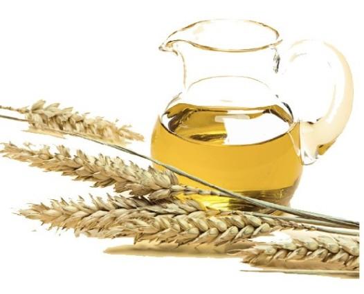 Масло зародышей пшеницы (Triticum vulgare)