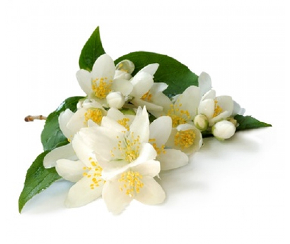 Гидролат Жасмина/Jasminum officinale (Франция)