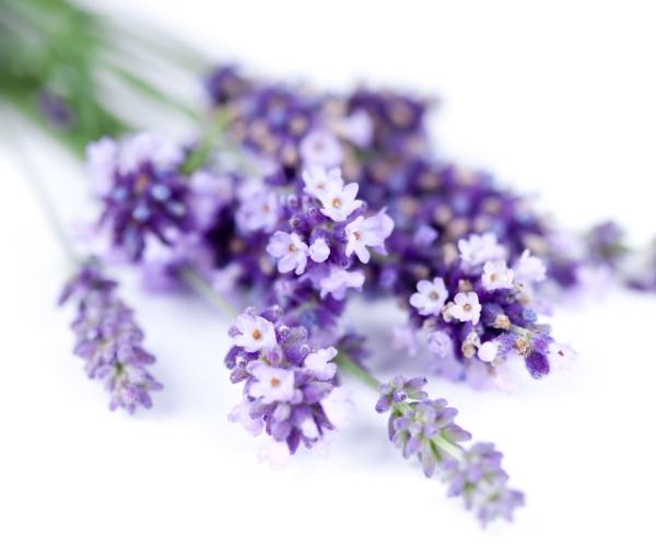 Гидролат лаванды /Lavender angustifolia/ (Франция)