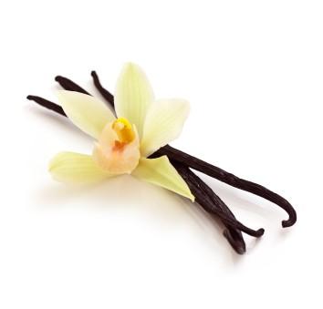 Мацерат ванили (масляный экстракт)/Macerat Vanilla planifolia