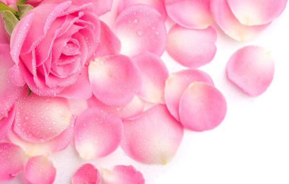 Гидролат розы дамасской/Rose damascena/(Франция)
