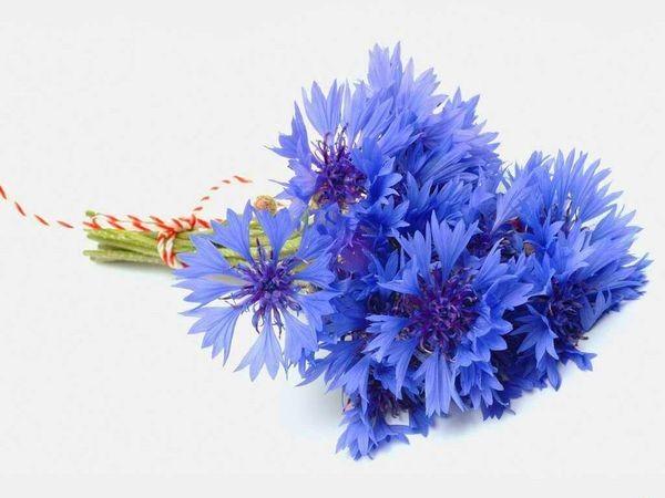 Гидролат василька /Centaurea Cyanus/(Франция)