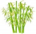 Гидролат бамбука/Phyllostachys aurea water (Франция/Германия)
