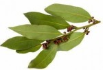 Гидролат листьев Бей/Pimenta racemosa