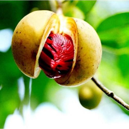 Масло Комбо не рафинированное (Pycnanthus angolensis)