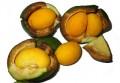 Масло пекуи (Caryocar brasiliense)